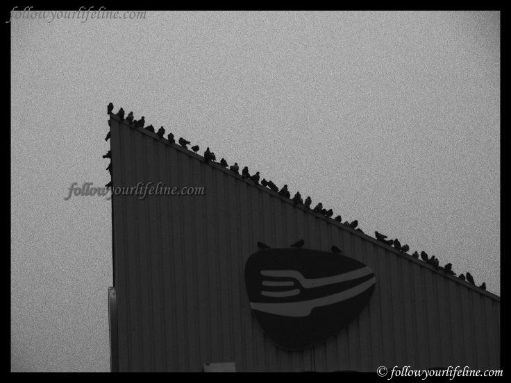 Stumm sitzen sie auf dem Dach und warten ab - die Vögel.